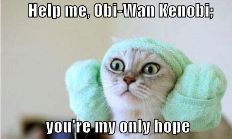 Help Me Obi Wan Lolcat