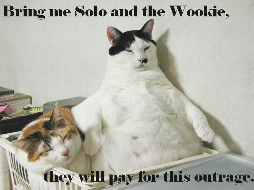 Solo and the Wookie Lolcat